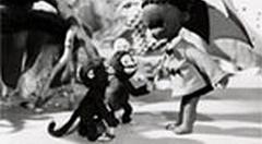 Chibikuro Sambo no Tora Taiji